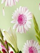 Blumentapete (Detail)