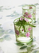 Sweet williams in flower-patterned glasses