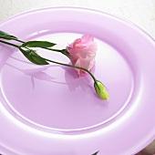 Blume auf pinkfarbenem Teller