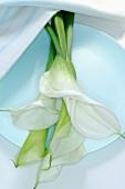 weiße Callas auf Teller
