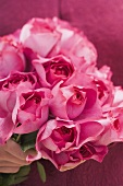 Hand holding bunch of pink roses