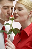 Couple kissing chocolate-dipped strawberry on rose stalk