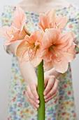 Frau hält lachsfarbene Amaryllisblüten