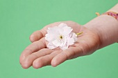 Hand holding a white flower