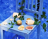 Sea shells and ivy on a chair