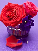 Red roses and African violets in vase