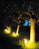 An illuminated garden - garden lamps in an apple orchard