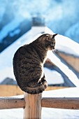 A cat sitting on a fence with a snowy alpine hut in the background