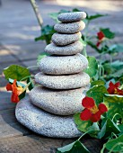 A stack of flat stones as garden decoration with nasturtiums