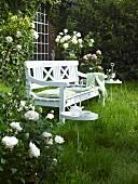 White garden bench amongst flowering roses