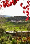 View from a seasonal, vineyard-run wine bar, Steiermark, Austria