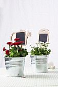 Daisies in zinc buckets with decorative labels