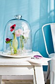 Glass cover over three small vases of anemones and ranunculus