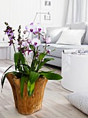 Flowering orchid in wooden planter