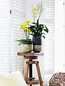Flowering orchids in Raku ceramic containers on wooden stool
