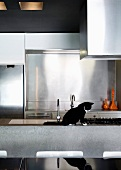 Cat sitting on a breakfast bar in a designer kitchen with stainless steel back splash behind the sink