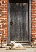 Dog lying in front of a vintage wooden door
