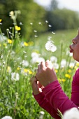 A little girl blowing a dandelion clock