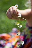 A child's hand holding a daisy chain