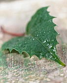 One leaf (close up)