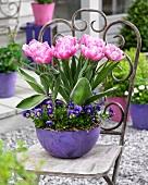 Rosafarbene Tulpen & blaue Hornveilchen in Pflanzschale