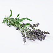 Lavendelstrauss (Lavendula Angustifolia)