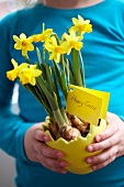 Man holding a plant pot with narcissus for Easter