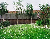 Blooming garden and concrete wall clad in wood