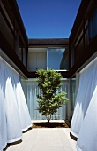 Modern courtyard design -- a single tree and curtains blowing at open terrace windows