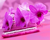 Pink dendrobium orchid flowers