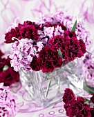 Dark red and two tone carnations (Dianthus Odessa)