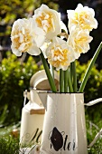 Narcissus flowers in an enamel jug in a garden