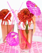 Echinacea flowers (Echinacea Guava Ice) in cocktail glasses