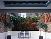 Greek atmosphere on city terrace with potted olive trees and white floor contrasting with high wooden fence with climbing plants