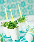 Cress and candles in egg cups