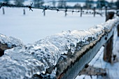 Icy wooden fence with barbed wire