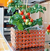 Tomato plant in unusual basket