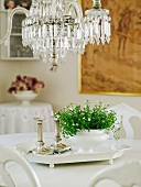 Green houseplant and two Greek-column-style candlesticks on white china tray below vintage chandelier