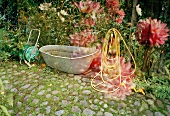 Small tub and garden hose next to flowerbed