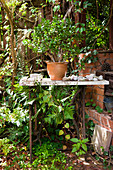 Potted plant on marble table with metal frame next to partially visible, brick outdoor oven