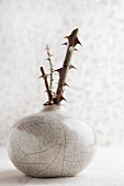 Ceramic vase with pieces of rose stem