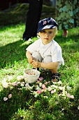 Little boy with basket and rose petals in garden