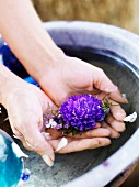 Woman's hands with flower in washbasin