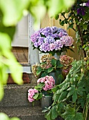 Hydrangea on steps