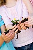 Drei Mädchen halten Blume mit Erdballen in den Händen