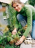 Frau setzt Pflanzen in das Beet