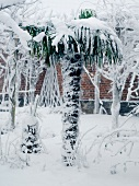 Snowbound artificial palm tree in garden