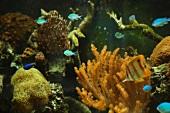 Aquarium (detail)