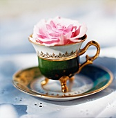 Rose in antique teacup with gilt handle