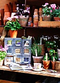 Flowers in pots, empty flower pots and other garden utensils on a shelf
